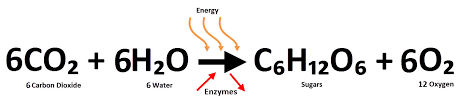 the equation below represents photosynthesis
