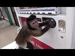 Monkey Vending Machine Custom This Monkey Can Buy Juice From A Vending Machine Wild Beauty