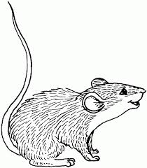 Small Picture Pin by Ellen Bounds on SKETCHES OF DORMICE MICE AND RATS