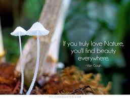 Quotes About Natures Beauty Best Of 24 Famous Nature Quotes Sayings