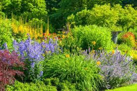ideas for easy perennial flowering plants