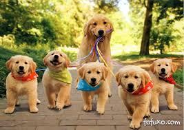 Resultado de imagem para fotos de cães