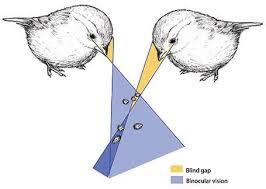 Purdue University Department Of Biological Sciences The Blind Gap
