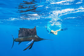 Samoan Fish Chart Snorkeling In The Seychelles Alphonse Island