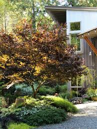 Small Picture Seattlefireglow Japanese Maple Garden Design Ideas Renovations