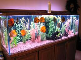 Bathroom Fish Decor Bathroom Fish Tank Designs Pictures For Small Bathrooms Home