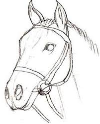 horse head drawing step by step. How To Draw Realistic Horse Head How Draw Horse Head Inside Drawing Step By