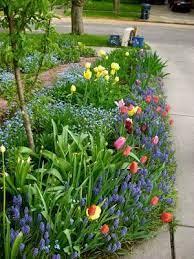 spring bulbs garden