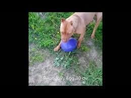 Видеозаписи Товары для животных из Европы. EuroShop Pets ...