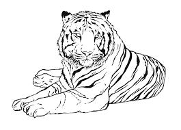 Tigre 13 Animaux Coloriages Imprimer