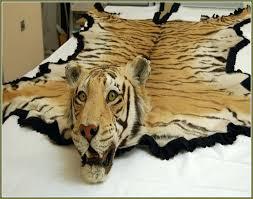 the tiger skin rug tiger skin rug with full head faux tiger skin rug with head