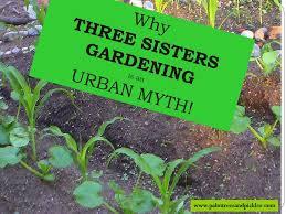 three sisters garden is a urban myth