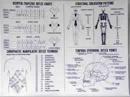 Chiropractic Wall Charts Cmrt Reference Wall Chart