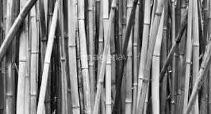 自然風景 森林 竹林の画像素材 写真素材ならイメージナビ