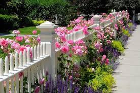 white fence ideas. White-fence-along-concrete-path-with-lavender-plants- White Fence Ideas M