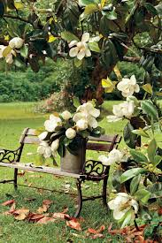 flower tree pictures. Exellent Flower Magnolia Tree And Flower Pictures O