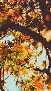 Fall Tree Wallpapers (75+ background ...