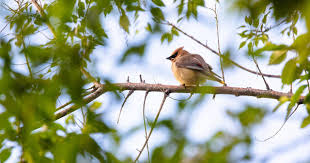 Migratory Birds Are Dying In New Mexico. Is This Happening In Colorado As  Well? | KUNC