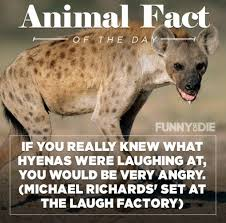 funny animal facts that might make you pee a little funny animal facts 10