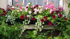 Best 25 Patio Planters Ideas On Pinterest  Planters Shade Front Container Garden Plans Flowers