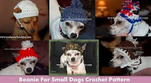 Crochet Dog Hat Pattern Extraordinary Ravelry Crochet Beanie For Small Dogs Pattern By Sara Sach