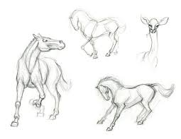Sketches Animal Sketches Animal Under Fontanacountryinn Com