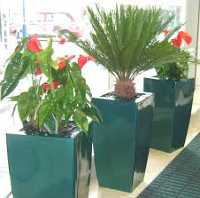 office plant displays. Office Plants Plant Displays