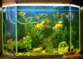 Elegant Aquarium In Einer Dunklen Ecke