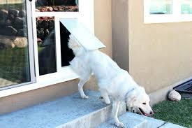 doggy door cutting edge design doggy door in wall