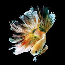 Download Gambar Ikan Bergerak Untuk ...