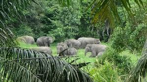 Petersburg, florida lan ditutup 31. File Kelompok Gajah Balairaja Jpg Wikipedia