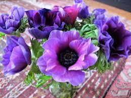 Saturday Flower Moments - LA in Bloom