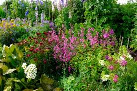 Small Picture English Cottage Garden Design Ideas Designing A Cottage Garden
