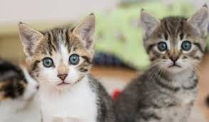 30 unbearably cute cat pictures from los angeles kitten rescue