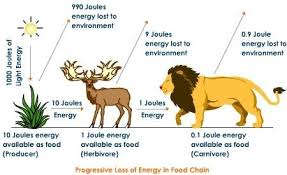 animal food chain. Interesting Food So Although It Looks Like Thereu0027s Plenty Of Food For The Animals At  Top They Get Only About 10 Percent That Energy Themselves Intended Animal Food Chain A