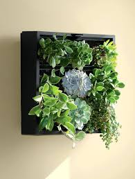 living wall planter green wall indoor living wall planter diy