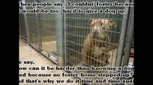 Urgent Dogs At Jefferson County Humane Society Wintersville Ohio