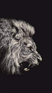 Lion Wallpaper Iphone 7