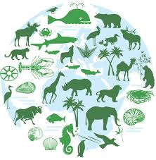 Image result for living things and their habitats year 5