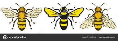 пчела логотип мед пчелы белом фоне рука нарисованные эскиз пчела
