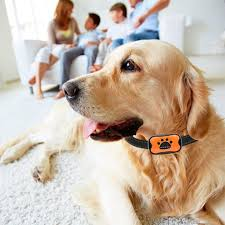 Best Bark Collars With Remote Chart Attack