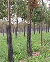 tree bark repair methods. Simple Bark Rigid Plastic Mesh Tree Bark Protector 36 Inches Tall Pack Of 5 Throughout Repair Methods L
