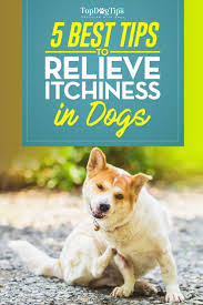 Dog Itchy Skin: 5 Ways to Relieve Itchiness in Your Dog