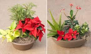 Christmas  McDonald Garden CenterChristmas Gift Plants