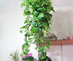 ... Large-size of Snazzy Clean Wall Me Decoration House Plants Decoration  Home Acces And Decorating ...