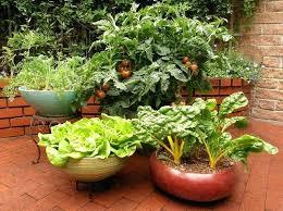 container gardening vegetables. Vegetables Container Gardening