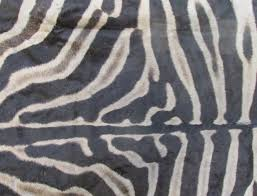 98 x 67 real zebra skin rug with felt backing you are ing