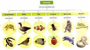 P3 Science Animals