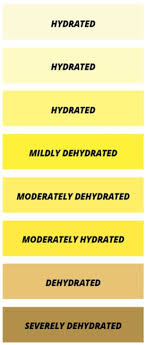 Water And Hydration