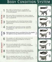 Purina Body Condition Score Chart Nestle Purina Cat Body Condition Chart